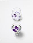 SC五味文彦「紫の花」