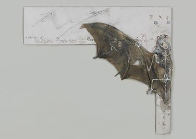 武藤博美-蝙蝠-